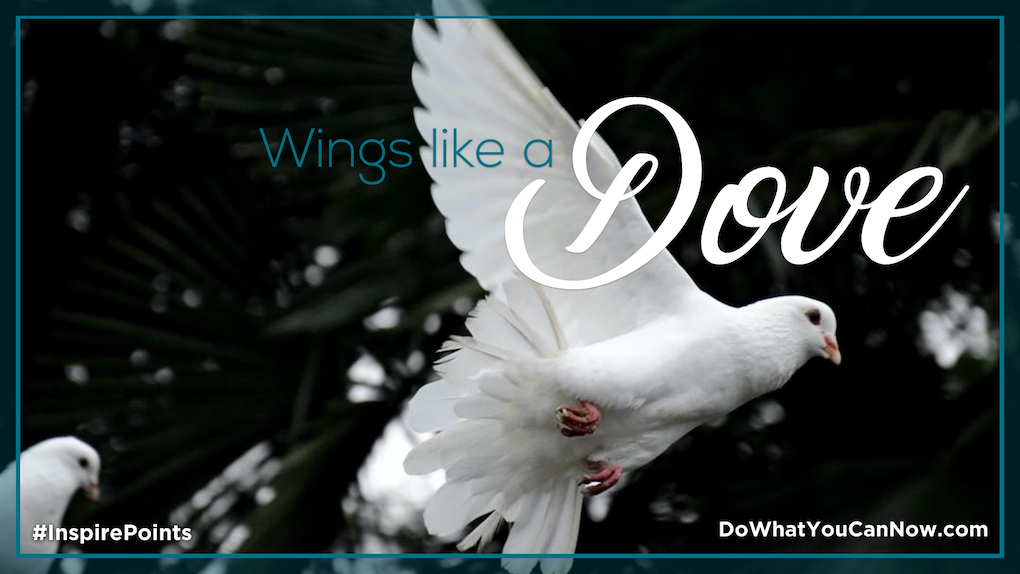 Wings Like a Dove